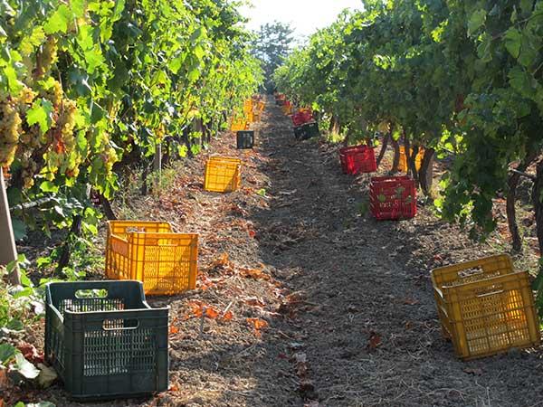 Azienda viticola Roccabianca oggi