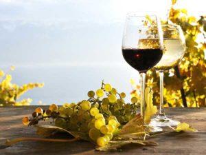 Azienda viticola Roccabianca vacanza emozione